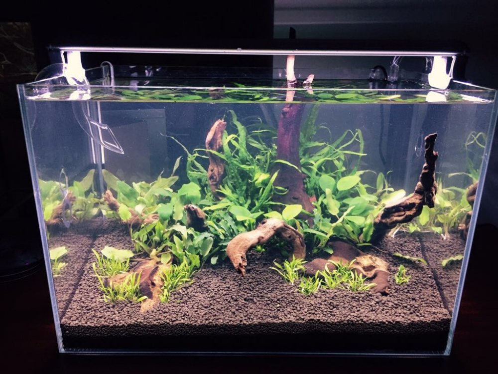 For Sale Starfire Tank For Sale Apsa