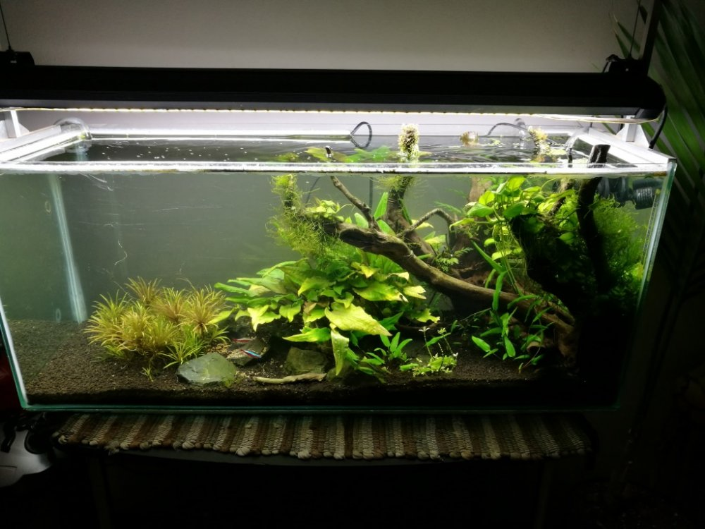 For sale - 3 Foot Aquascape tank and Cabinet with many ...