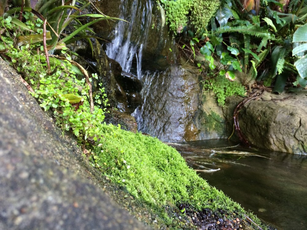 Wanted i am looking for pond plants and fish apsa for Pond fish wanted