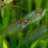 FishyPanda