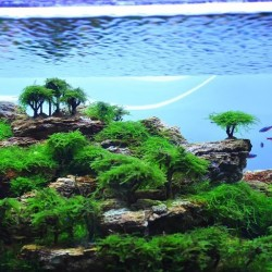 Inspirational aquascape 2