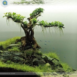 Inspirational aquascape 1