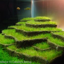Inspirational Aquascape 3
