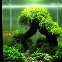 Inspirational Aquascape 4