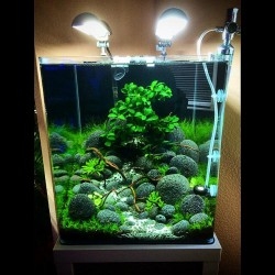 Inspirational Aquascape 7