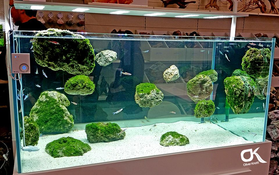 Aquascaping Oliver Knott : Exhibition tank Interzoo 2014 by Oliver Knott APSA