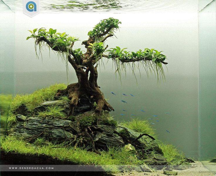 Inspirational Aquascape 1 Apsa