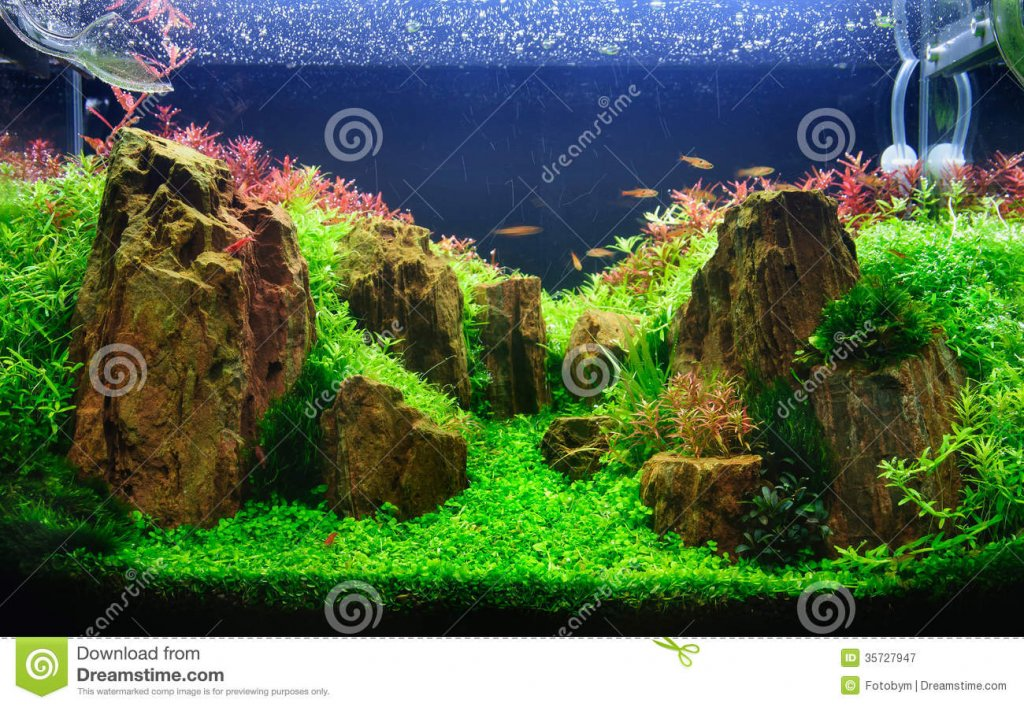 Inspirational Aquascape 10