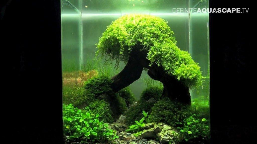 Inspirational aquascape 11 apsa - Gallery aquascape ...