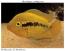 Fishwhisperer